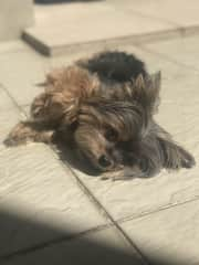 My little dog Kelby getting tanned ;)