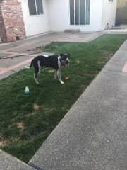 backyard and Luke