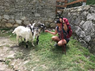 Audra with friendly followers in the Picos de Europa