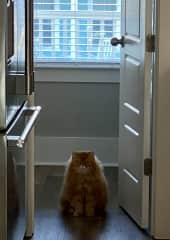This is the pantry where he will sit at the door when it is time for food!