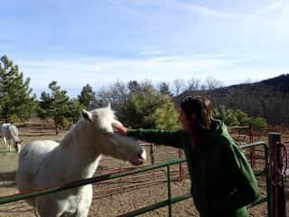 Horse-sitting :)