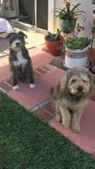 Dusty and Dakota in my backyard