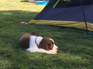 Camping with our beloved Zin (he passed away at 14 in 2018)