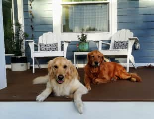 Jessie in front and Mika in the back laying on our porch.