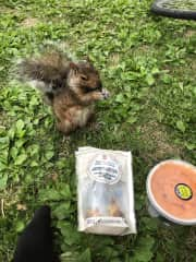 Lunch with a squirrel.