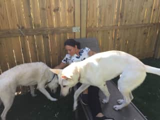 Nereyda with Duke and Dixie in a housesit in Tampa, Fl