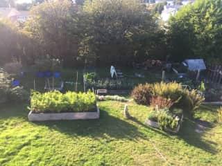 Fully fenced yard with garden