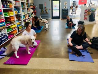 another of my doga classes at a dog bakery