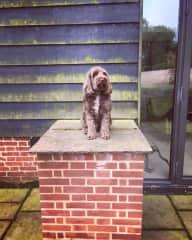 Ziggy posing outside the barn!