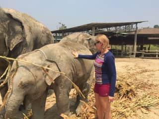 Paid Work Vacation in Thailand at an Elephant Sanctuary in the Mountains