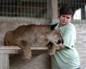Working at C.A.R.E. Foundation with Katcha (Florida Panther)