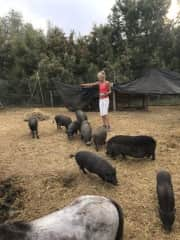 Feeding the pigs whilst volunteering