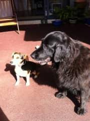 Rusty and Bella