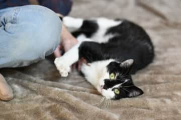 Nubia is a very playful cat.