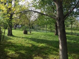 Large, fenced garden.