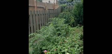 My old garden in Brooklyn 2020.