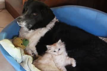 Our dog Ria, who passed away in 2017 and our neighbours kitten, who we looked after whilst they were on holiday.