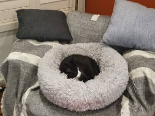 This is her cosy bed