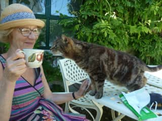 Me with Dee the cat - I house sat for his owners last year