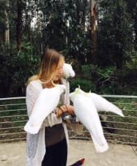Feeding the birds in Australia