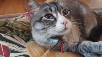 Josie is a lap-sitter with beautiful, blue eyes.