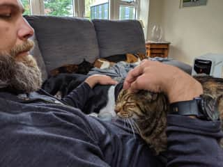 2 dogs and 2 cats all cuddling - Trim Ireland