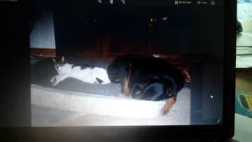 Bramble sharing Jura's Bed .