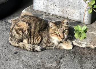 A Taiwanese street cat