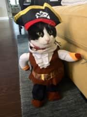 Oscar the pirate