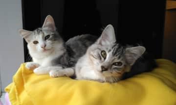 Mojo and Bijoux (background)