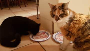 The neighbourhood cats that we often feed
