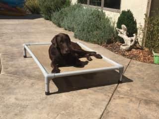 Woody sunbathing