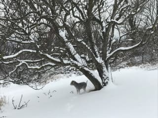 Christmas Snow in the meadow