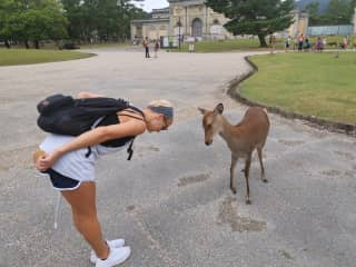 Some deer we fell in love with in Nara