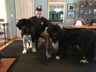 Me with my Newfies Cowboy and Siri