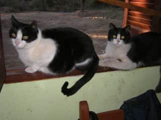 Shiva and Felix