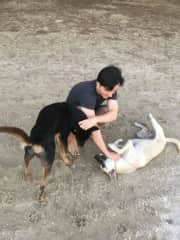 Petting stray dogs on the beach near our house in Thailand, we are trying to take care of them when we're there