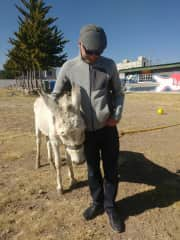 Enjoying Palomo at our son´s donkey from school.