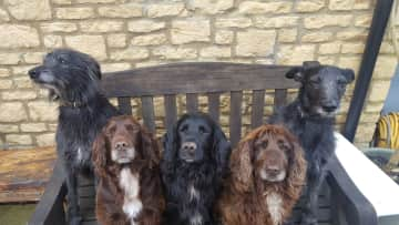 Pet sitting this amazing guys in UK