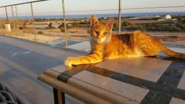 Our latest rescue cat Tigger sunning himself on the terrace.