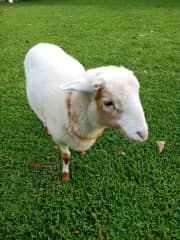Sheepy who is very gentle and loves company and lots of scratches. She is like a dog and will follow you around or sit by your feet when you are sitting in the garden.