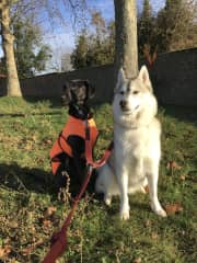 Mishka and Kuro. Love you guys, thank you for all the intense walks:)!
