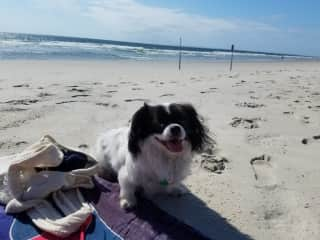 Basking in the sun at the beach