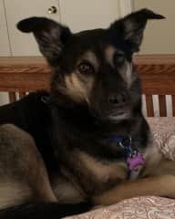 My sister's sweet pup Glenna