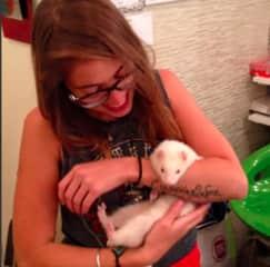 Meet lili, the friendliest ferret ive ever met