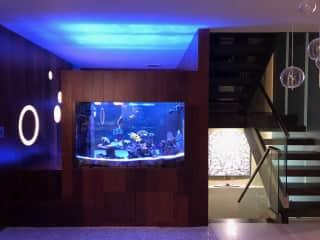 Marine Aquarium