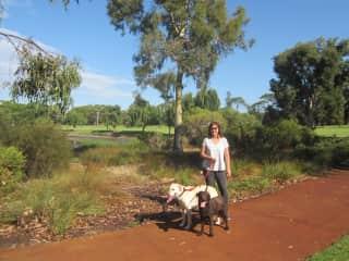 Janett walking dogs in Nedlands