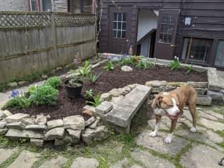 Chex in our little Chicago garden
