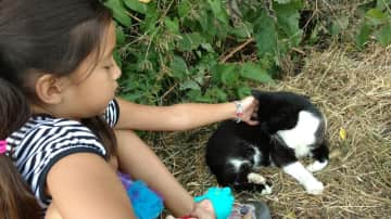 This isn't our cat, but my daughter loves animals and pets all the cats we meet on our journeys. This is a cat we met  in Holland.