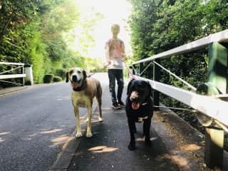 My son walking Rosie and Oscar - July 2019